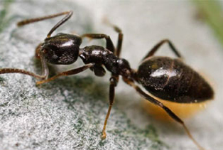 ant-control-maple-valley-wa