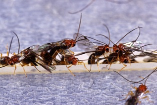 ant-removal-issaquah-wa