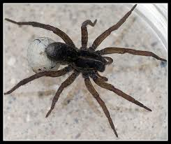 spider-extermination-graham-wa