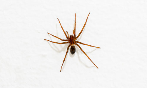 spider-removal-graham-wa