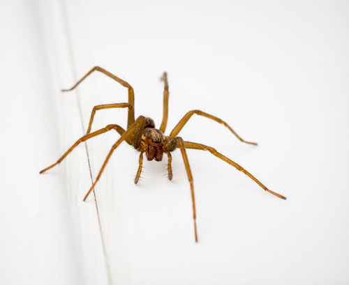 spider-removal-maple-valley-wa