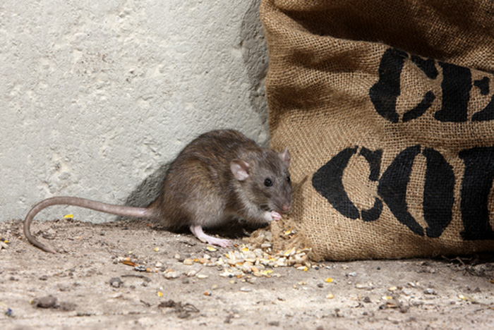 Mouse-Control-and-Extermination-Federal-Way-wa