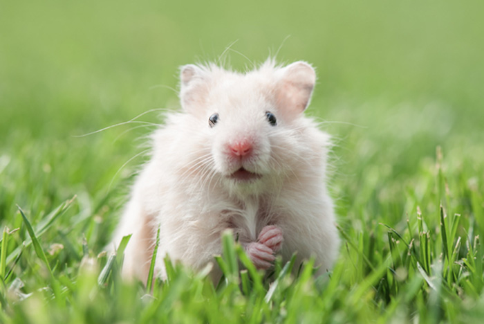 Rodent-Control-Services-Kent-wa