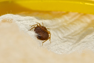 bed-bug-removal-tacoma-wa1